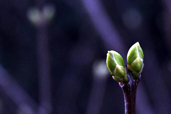 Počasie vo štvrtok na východe pripomínalo skôr jar.