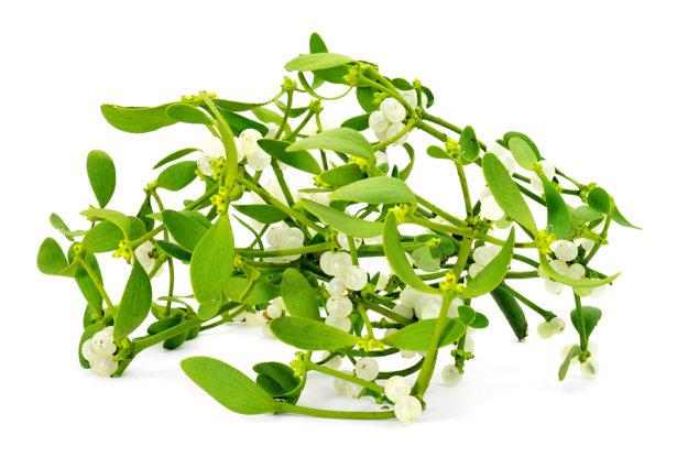 Imelo biele nemá len dekoratívnu funkciu, používa sa aj ako čajovina na zníženie tlaku.