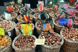 Trh s cibuľkami tulipánov.