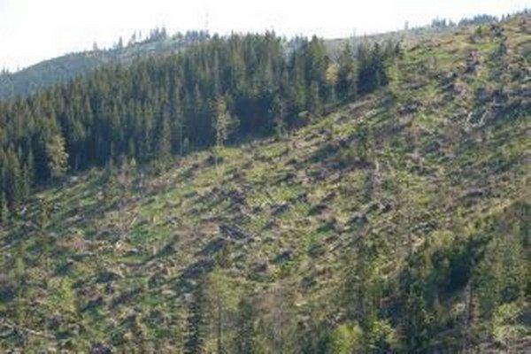 Časť mestských lesov po kalamite