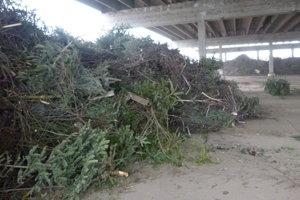 Keď pozbierajú všetky stromčeky, podrvia ich a použijú na energetické účely.