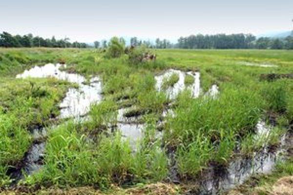 Podmáčané polia prinesú slovenskému poľnohospodárstvu výrazné straty.