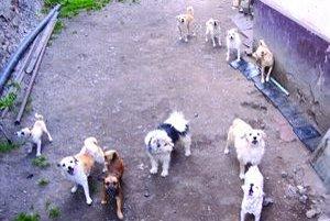 Stará pani žije iba pre 26 psov.