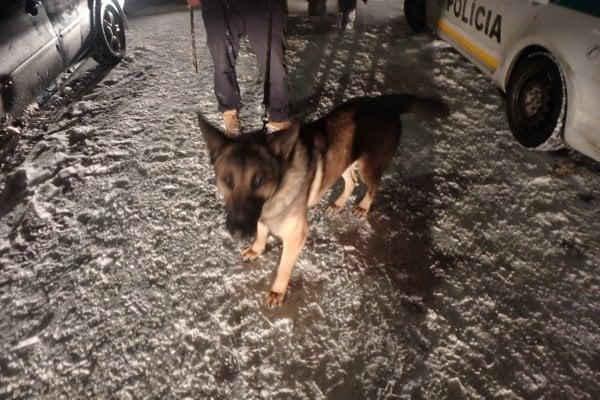 Jeden z nájdených psíkov.