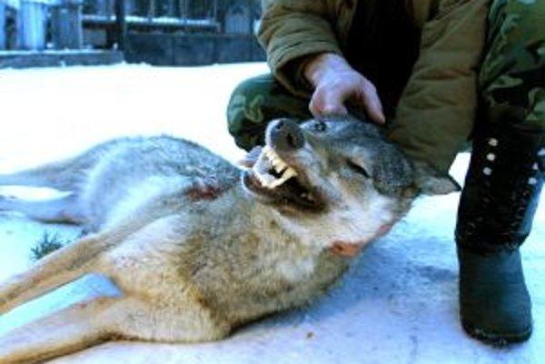 Kvóty na lov vlkov odbprníkov rozdeľujú