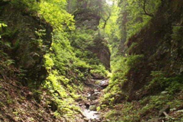 Prírodná rezervácia Svrčinník je významná svojim pralesovitým charekterom. Poškodil ju nelegálny výrub stromov.