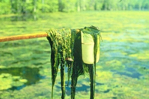 Riasy sú jedným zo zdrojov bionafty.