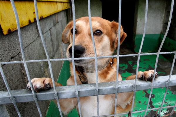 Útulky pre psov sa snažia hľadať pre odchytené zvieratá nový domov.