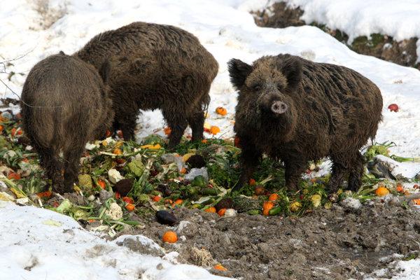 Vyhadzovaním zbytkov ovocia a zeleniny ľudia prestierajú zvieratám stôl.