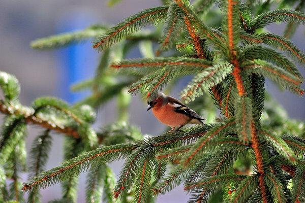 Vtáčí spev ohlasuje príchod jari.