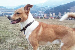 Majitelia psov často zabúdajú na povinnosti súvisiace sich chovom.