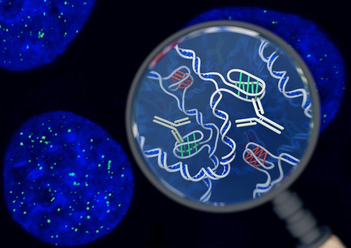 7a5acf888 V ľudskej bunke objavili novú štruktúru DNA i-motif - Tech SME