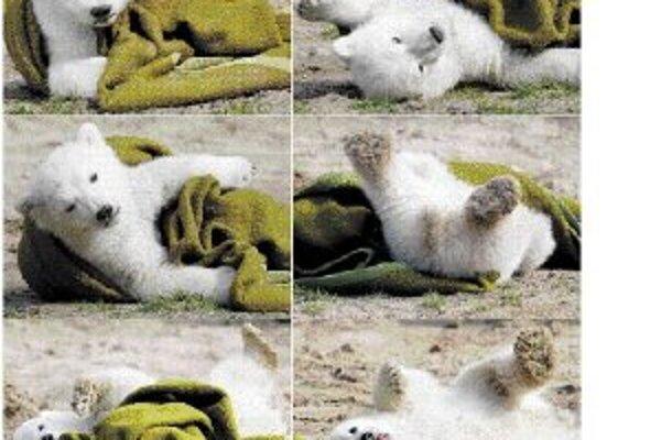 Príbeh siroty, ľadového medvedíka Knuta.