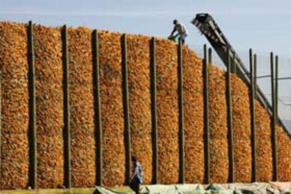 Táto kopa kukurice nie je na jedenie. Bude z nej palivo.