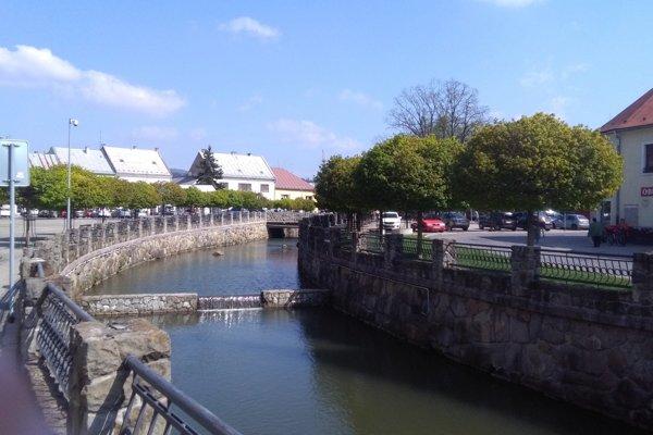 Listy mladých javorov naaleji zroku 2010 na Námestí Slovenskej republiky napadla múčnatka.