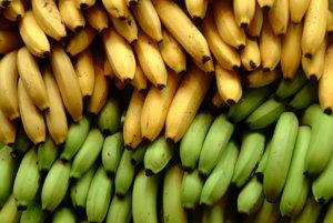 Ak ste niekedy jedli banán, pravdepodobne bol z odrody Cavendish.