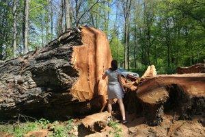 Zábery z apríla: Miestni sa pri strome fotili.