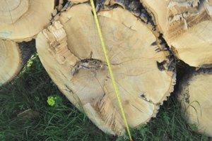 Staré stromy zo Sitna