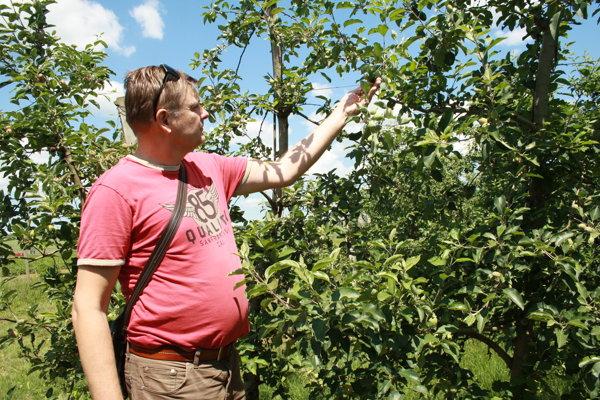 Konateľ Miloš Šebo pri jabloniach v sadoch v Návojovciach.