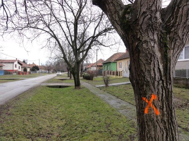 Značky na zdravých stromoch sú podľa obyvateľov jasným znakom, že dedina chystá ich likvidáciu.
