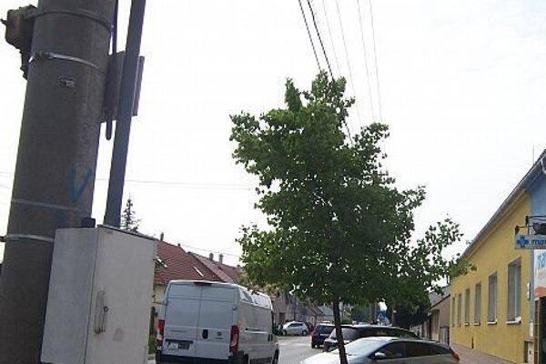 Strom by malo mesto orezať.