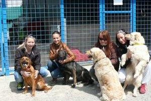 """Soňa Orčíková (druhá zľava) a jej """"pomocné ruky"""" sa starajú o nechcených psíkov."""