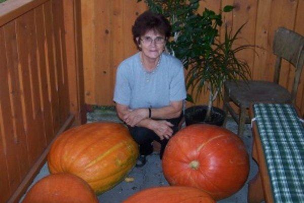 Margita Zimenová s tekvicami. Najväčšie  pošle na výstavu záhradkárov vo Varíne.