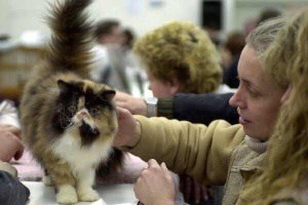 V Žiline bude cez víkend 10. a 11 medzinárodná výstava mačiek.