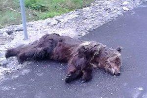 Trojročný medveď zrážku s autom neprežil.