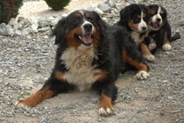 Každý pes starší ako tri mesiace musí byť zaočkovaný proti besnote.