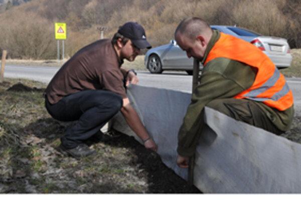 Ochranári inštalujú plot, vďaka ktorému skokan hnedý neskončí pod kolesami automobilov.