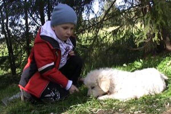 Zatiaľ je z ovčiarskeho psa len šteňa, do mája, kedy pôjdu ovce opäť do hôr, však určite dorastie.