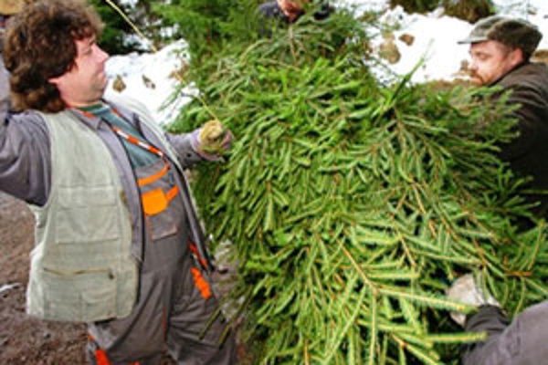 Živé vianočné stromčeky na Orave nezdraželi, no záujem o ne stále klesá.