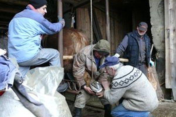 Jozef musí byť pri podkúvaní pozorný, aby zviera neporanil.