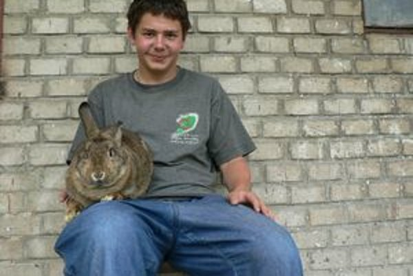 Mladý chovateľ s jedným zo štvorice súrodencov viedenského divoko sfarbeného králika, s ktorým získal titul európskeho šampióna.