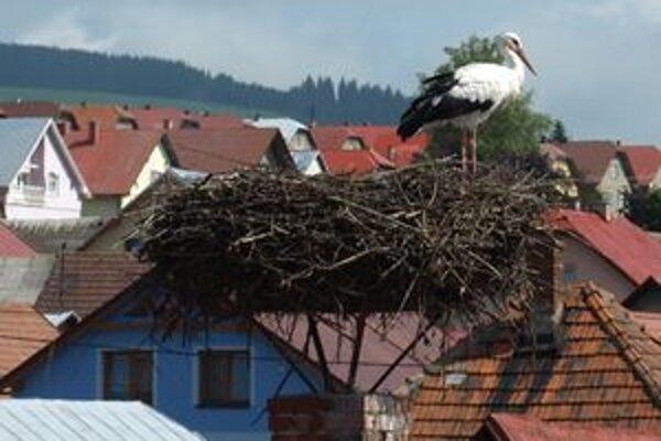 Aj tento bocian na jednej z tvrdošínskych budov v máji sadal na vajcia. Mladé však z hniezda nevyleteli.