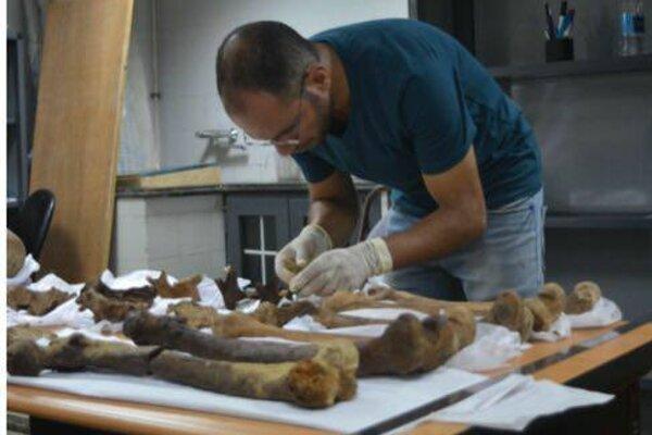 V kenskom múzeu sa našli kosti doteraz neznámeho