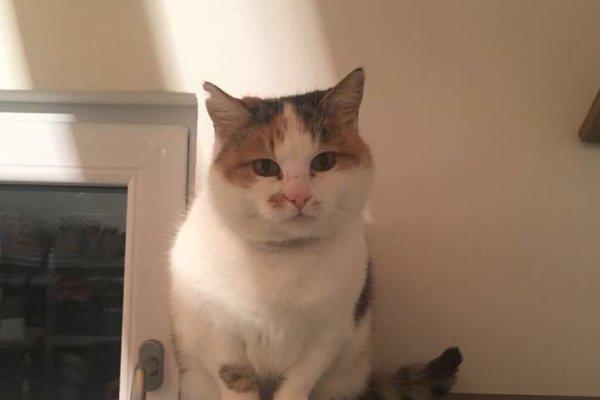 Chýbajúci trojuholník na uchu znamená, že mačka na ulici je kastrovaná.