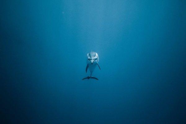 Delfín v mori.