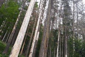 Lesy v Zákopčí sú zničené.