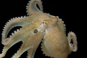 Extáza nemení len ľudské právanie, ale aj z nespoločenských chobotníc spraví družnejšie tvory.