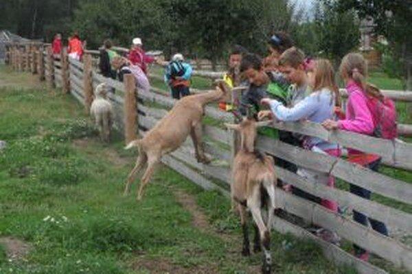 Deťom sa najviac páčili výlety za zvieratami.