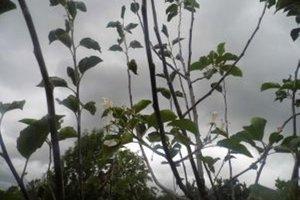 Strom v Šútove nečakane zakvitol aj napriek jeseni.
