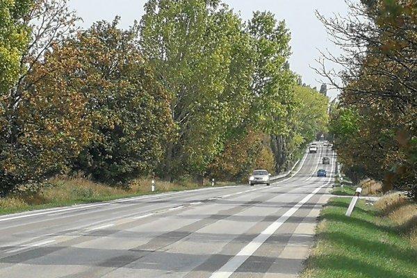 Medzi Trnavou a Bučanmi je viacero vyschnutých stromov.