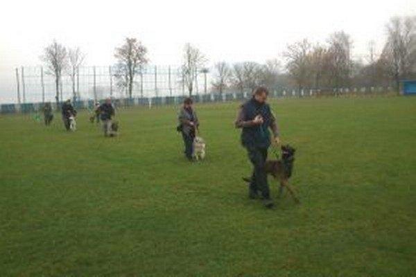 Psy sa na cvičisku učia základom poslušnosti.