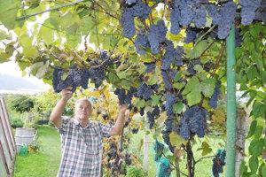 Tomáš Salák pri jednej zjeho 35 odrôd viniča.