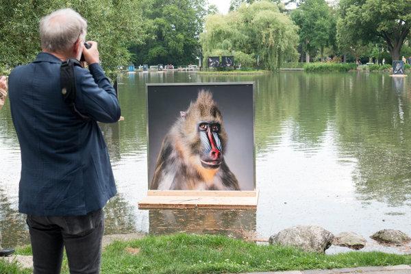 Snímky Tima Flacha plávali na hladine jazera