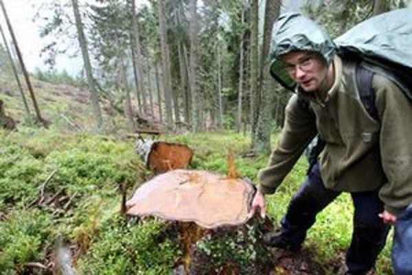 Výrub dreva v Smrekovici.