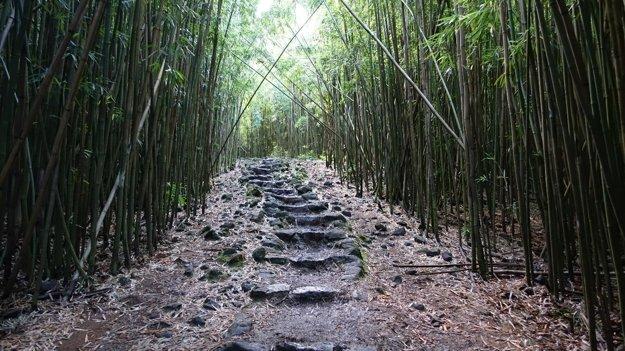 Bambusový prales.