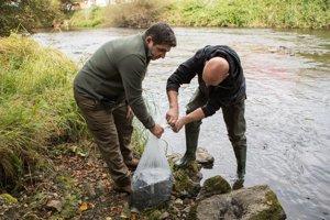 Hron pri Brezne sa opäť stáva živou riekou. Ryby do rieky vypúšťal aj primátor Tomáš Abel